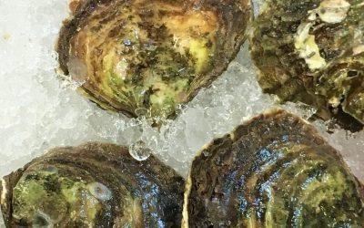 Shellfish poisoning outbreak